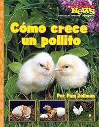 Como crece un pollito / A Chick Grows Up