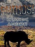 Rhinos Relaxing Ambient [OV]