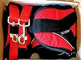 3RD-POLE Professionelles Set für Canicross/Trekking/Jogging/Skijoring, mit Gürtel und Bungee Strong Leash - 3 Größen. 2 Jahre Garantie, L: Dog's Weight: 60+ lb, Roter Gürtel und rote Leine