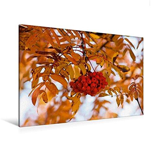 Premium Textil-Leinwand 120 cm x 80 cm quer, Eberesche im Herbstkleid   Wandbild, Bild auf Keilrahmen, Fertigbild auf echter Leinwand, Leinwanddruck (CALVENDO Natur)