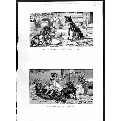 Cuenco Antiguo de la Comida de 1886 de Color de la Impresión de los Animales de los Gatos Gatitos de los Perros