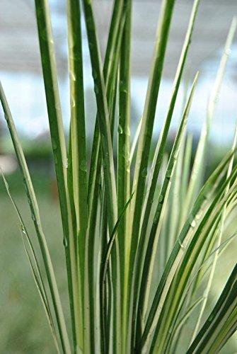 OBI Gelb-grüne Blätter