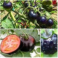 Pinkdose 100 / bolsa de escalada Tomate bonsái comestibles Plantas de tomate Tomate Vegetal Sin OMG maceta para alimentos huerto casero planta: Gris oscuro