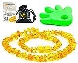 AmberJewellery Collar de Ambar 33cm. - De la Máxima Calidad Certificado Genuino Collar de Ámbar Báltico/Rápido Entrega / 100 Días de Garantía de Devolución de Dinero! (Honey)