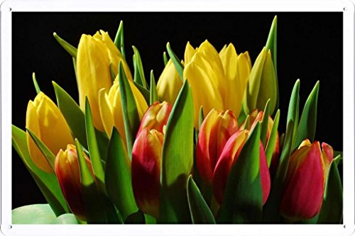 metallo-poster-targa-in-metallo-piastra-flower-tin-sign-tulips-flowers-buds-flower-light-black-backg