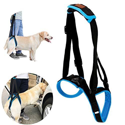 Pet Support Sling Verstellbar - Atmungsaktives Mesh Gepolsterte Riemen, Hundegeschirr für Hintere Beine Hunde Rehabilitation bei Verletzungen Arthritis Schwache Hinterbeine, Blau,L