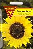 Sonnenblumen, ca. 20 Samen