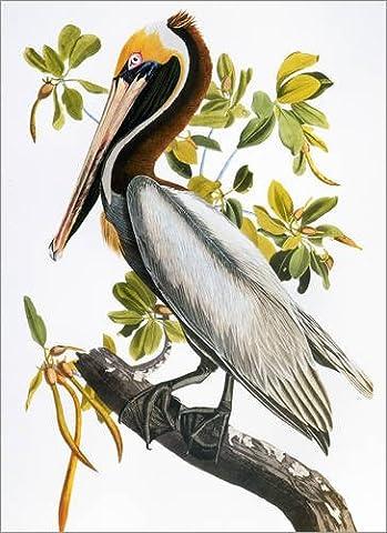 Holzbild 80 x 110 cm: Audubon: Pelican. von John James Audubon / Granger Collection