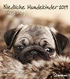 Niedliche Hundekinder - Dinky Dogs - Kalender 2019 - teNeues-Verlag - Wandkalender mit niedlichen Hundebabys und Platz für Eintragungen - 30 cm x 34 cm