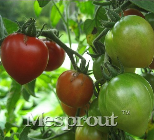 Nouveaux frais rares « en forme de coeur » Graines 100+ tomate