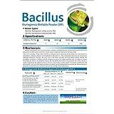 thuricide BT Bacillus thuringiensis 32000UI/MG 25G 5bags (= 125g) Worm Killer