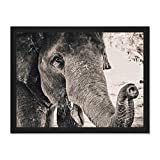 Chambon Elephant Close-up Trunk Large Framed Art Print Poster Wall Decor 18x24 inch