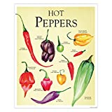 Close Up Hot Peppers Kunstdruck/Paprika Küchenposter Kleinformat 40x50cm - Premium Qualität Ü-Poster