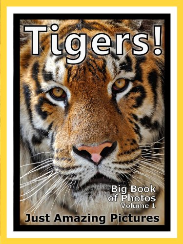 Just Tiger Photos Big Book Of Photographs Pictures Of Tigers Vol 1