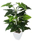 Closer to Nature Artificiale 4ft Calla Lily Plant - Seta Artificiale Impianti e Albero Gamma
