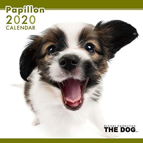 The Dog Wandkalender 2020 Papillon -