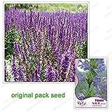Vista 60 Samen/Pack, Waldmeister-Samen, Süßer Kragen, Blume von Asperula orientalis, Balkonblumen-Bonsai