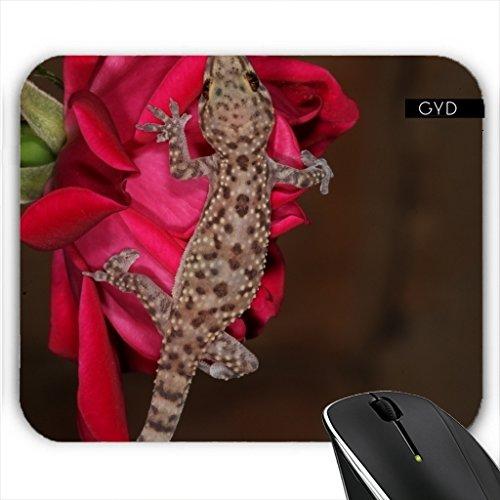Muismat - Gecko Su Una Rosa Rossa.