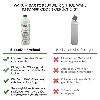 BactoDes Animal-Désodorisant, Désodorisant concentré à diluer (rapidité de double usage Quantité de solution)-avec flacon de mélange-Élimine les odeurs d'urine d'animaux, chat urine Odeur, odeur d'Animaux, Chat urine, hundeurin, odeurs de petit animal Long-Un véritable Destructeur d'odeur pour la suppression des odeurs Durable