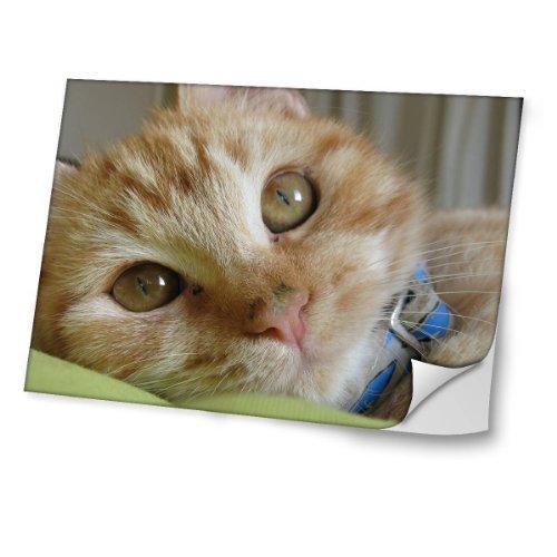 Virano Katzen 10050, Braune Katze, Skin-Aufkleber Folie Sticker Laptop Vinyl Designfolie Decal mit Ledernachbildung Laminat und Farbig Design für Laptop 12.5