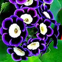 Fash Lady Seltene Phantom Petunie Blumensamen 200 Samen Pack Garten Bonsai Petunia samen