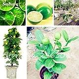 Portal Cool 10 Stück seltene Zitrone Limette Samen Sukkulenten Limon Obst Bonsai mehrjährige Baum Pflanze