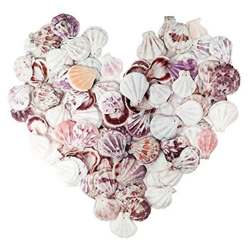 sopplea 100 Stück Natürlichen Muschel Perlen Deko Muscheln zum Basteln