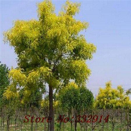 Vendita Vendita calda! 100pcs / bag rari semi Elm cinesi 20 varietà Bonsai Semi Garden Novel piante Anti-Radiation