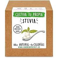 Garden Pocket - Kit cultivo STEVIA