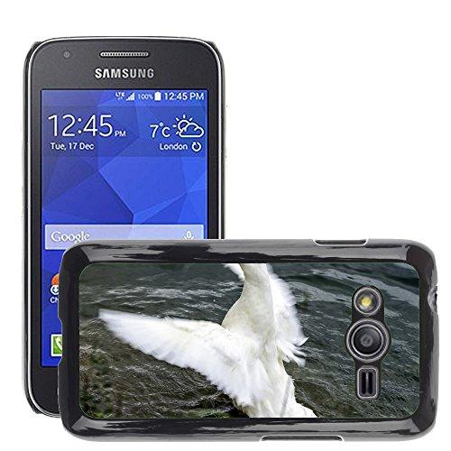 Newsbenessere.com 51XsJrXCBSL GoGoMobile Hot Style-Custodia rigida per cellulare, a forma di anatra, M00123371 ali d'acqua per stagni e laghetti, con lago/Samsung/Galaxy, Ace4 Galaxy Ace 4/LTE SM-G313F