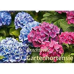 Prachtvolle Gartenhortensie (Wandkalender 2019 DIN A3 quer): Blüten von Hortensien (Monatskalender, 14 Seiten ) (CALVENDO Natur)