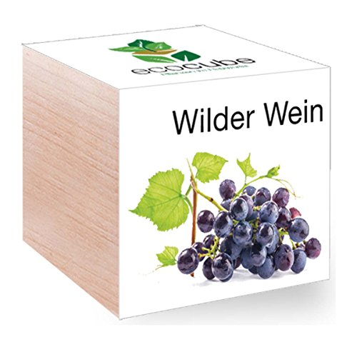 Feel Green Feel Green EcoCube Wilder Wein, Pflanze mit Samen aus ökologischer Edel-Holzbox als Geschenk für Zuhause, Einweihungsgeschenk für Frauen und Männer, Deko Geschenkidee (Wilde Frauen In Der Küche)