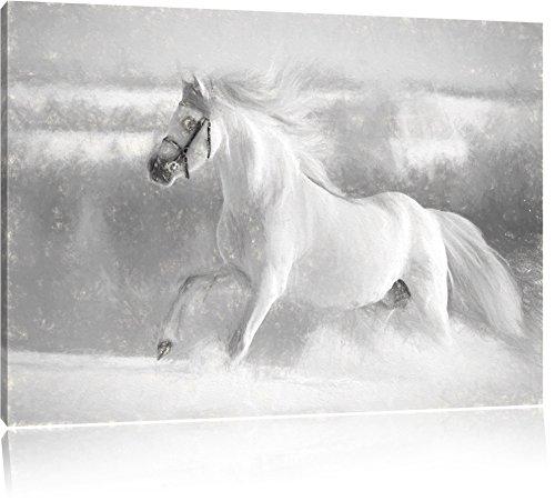 Cavallo bianco a tutti gli effetti il