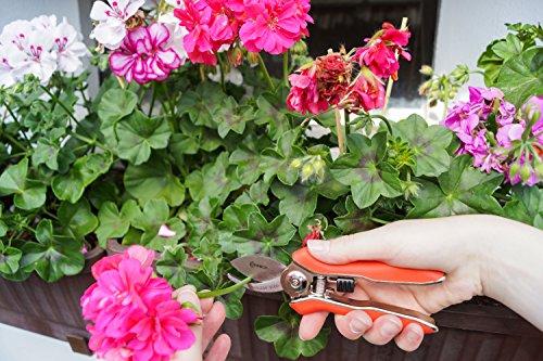 connex-mini-blumenschere-blumenschere-floristikschere-rosenschere-gartenschere-flor70367-2