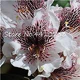 Pinkdose 100 Pezzi Rare Piante Colorate di rododendro Azalee in Vaso Come Gigli di Geranio Semillas de Flores Illumina Il Tuo Giardino Personale: l