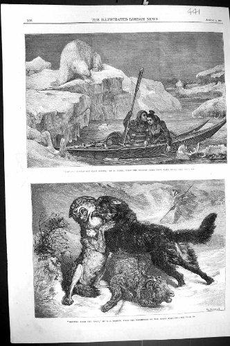Carters Eisbär (Lappland-Liebhaber-Kap-Norden-Romance Eisbär-Schaf-Wolf-Hund 1866 Carter)