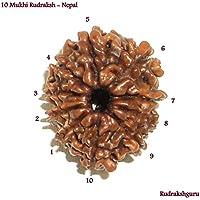 Vedic Vaani 10 Mukhi Nepal Rudraksha Brown preisvergleich bei billige-tabletten.eu