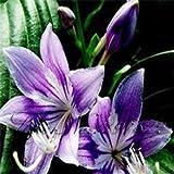 100 pc / sacchetto 24 colori semi del giglio, profumo a buon mercato gigli semi, raro colore dei fiori piante da giardino - miscelazione diverse varietà viola