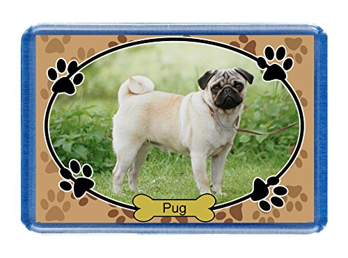 Pug – Postcard-Style Design – 7cm x 4.5cm – Novelty Dog-Lovers Fridge Magnet.