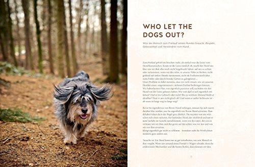 Freilauftraining für den Hund - 3