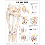 Hip and Knee Anatomical Chart...