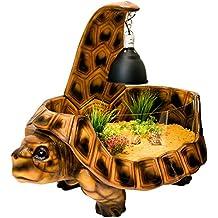 vividarium tortuga casa