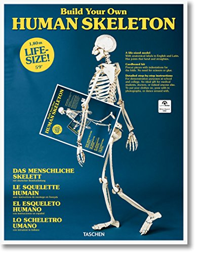 Build Your Own Human Skeleton – Life Size! - Partnerlink