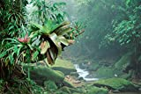 Fine Art Print – Bromelien Wachsende entlang Stream in bocaina National Park, Atlantic Forest, Brasilien von Bentley Global Arts Gruppe, canvas, multi, 15 x 10