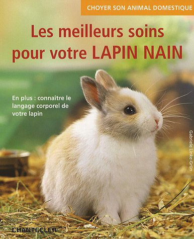 Les meilleurs soins pour votre lapin nain