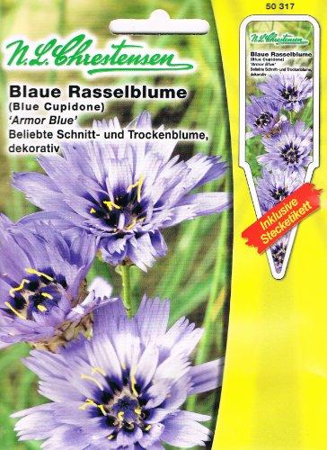 Blaue Rasselblume 'Blue Armor' blau, beliebte Schnitt- und Trockenblume, dekorativ, Staude ( mit Stecketikett) 'Catananche cearulea'