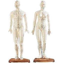 newgen medicals Akupunktur Puppe: Akupunktur-Figuren 2er-Set (Mann/Frau) (Akupunktur Modell)