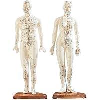 newgen medicals Akupunktur Puppen: Akupunktur-Figuren 2er-Set (Mann/Frau) (Akupunktur Modell)