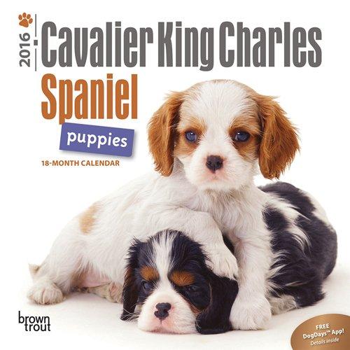 Cavalier King Charles Spaniel Puppies 2016 Calendar