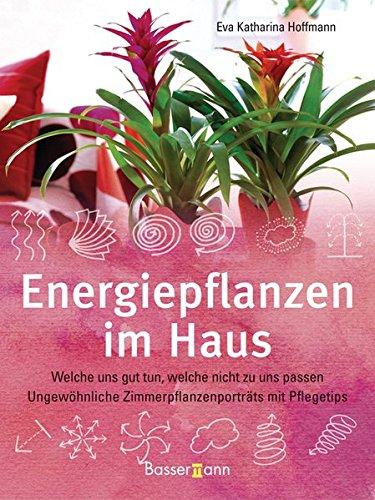 energiepflanzen-im-haus-welche-uns-gut-tun-welche-nicht-zu-uns-passen-ungewohnliche-zimmerpflanzenpo
